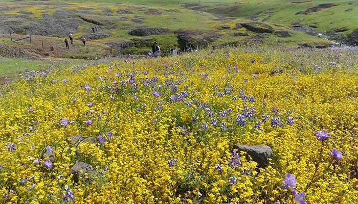 California Anza-Borrego Desert State Park