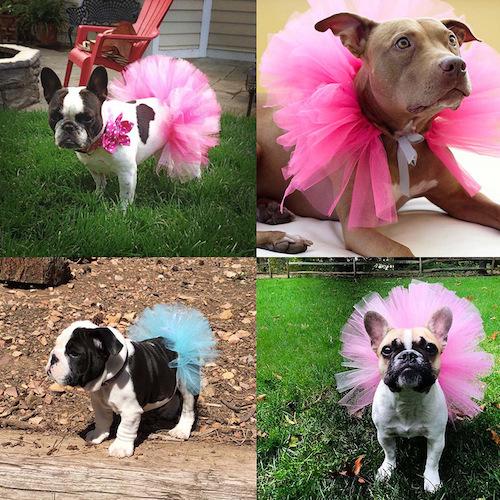 Cute Pet Puppy Dog Cat Lace Skirt Princess Tutu Dress Pet Clothes from Buyincoins